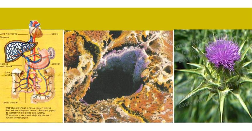 Jak dbać o zdrowie wątroby i pęcherzyka żółciowego